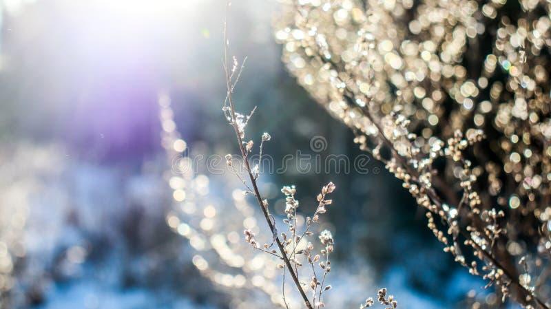 Stäng sig upp i skogen i vintertid royaltyfria bilder