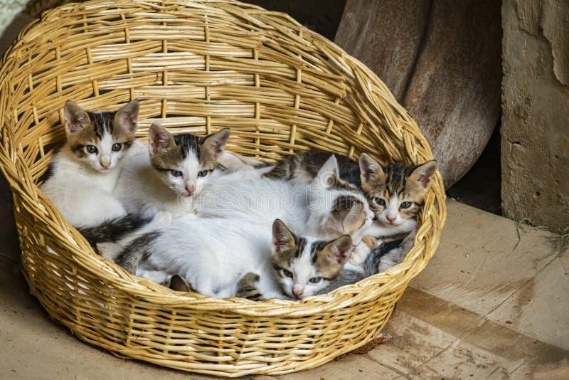Stäng sig upp kattungar i vide- korg i natur royaltyfria foton