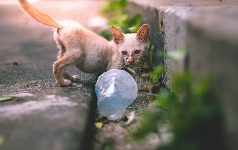Stäng sig upp liten mager fattig tillfällig kattunge eller katt royaltyfria bilder