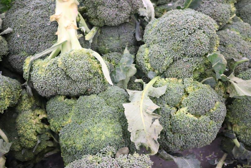 Stäng sig upp, många ny grön broccoli som kvarter är sund grönsakmat royaltyfri fotografi