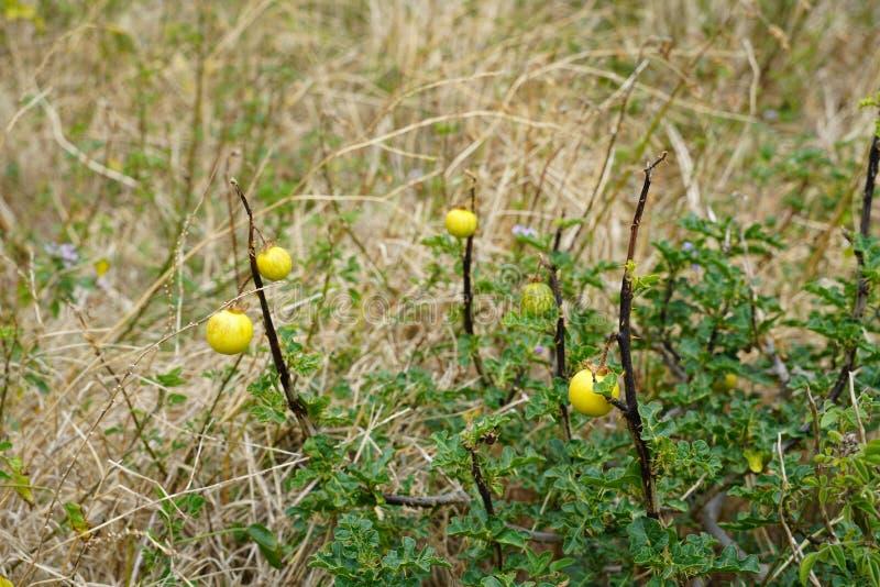Stäng sig upp med specifik vegetation för madeiran royaltyfri fotografi