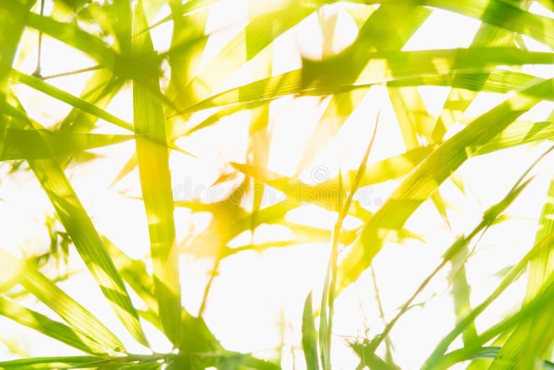 Stäng sig upp naturen av det gröna bladet parkerar in, naturlig grön bambu arkivbilder