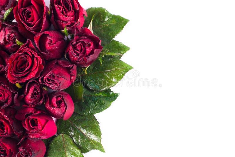 Stäng sig upp naturliga röda rosor och vattendroppar Hälsningkort med röda rosor och utrymme för text genom att använda som valen arkivbilder