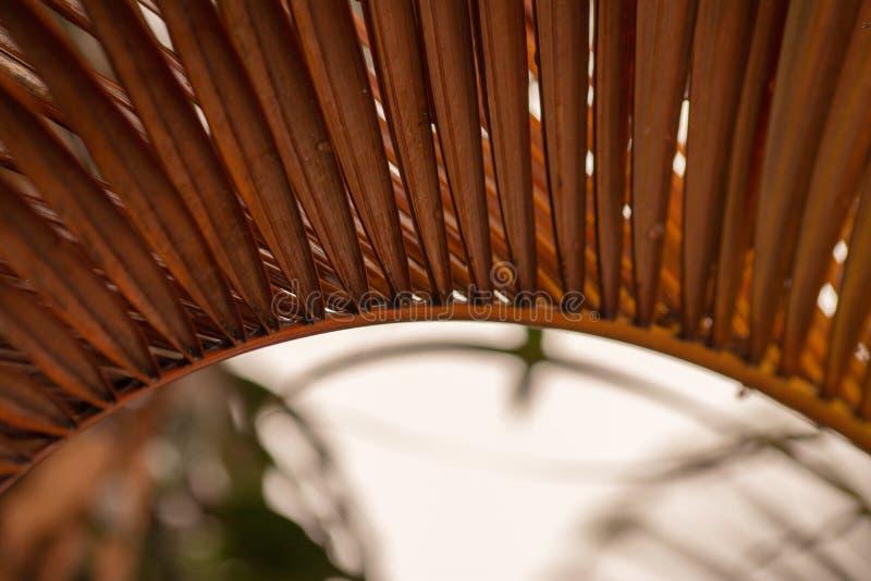 Stäng sig upp sidorna av torkade palmträd royaltyfri foto