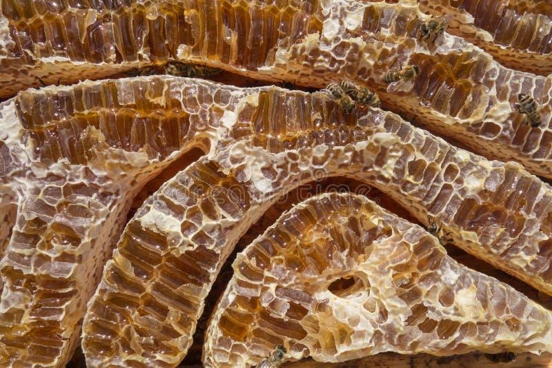 Stäng sig upp sikt av honung fyllda honeycells och funktionsdugliga bin royaltyfri fotografi