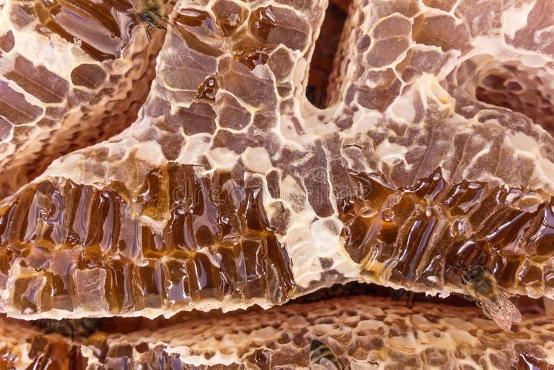 Stäng sig upp sikt av honung fyllda honeycells och funktionsdugliga bin royaltyfri foto