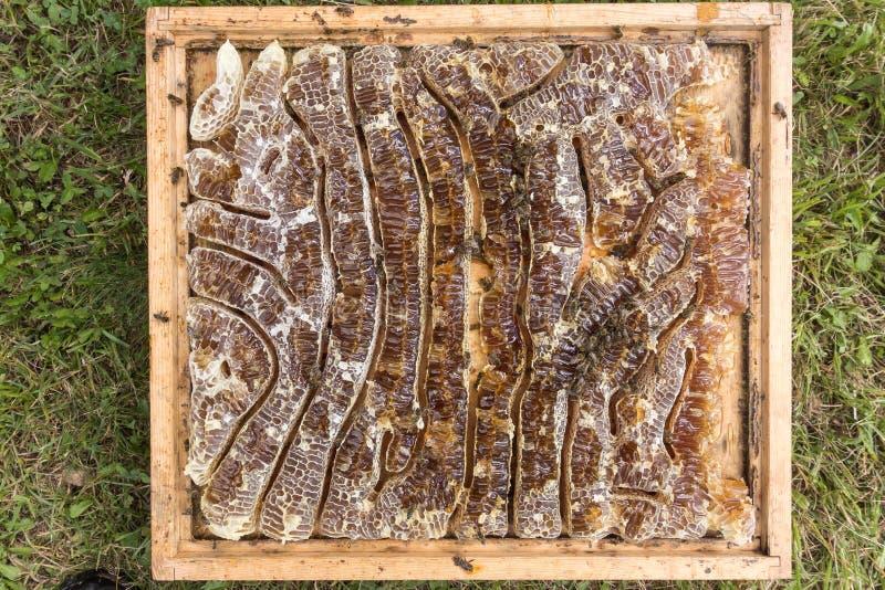 Stäng sig upp sikt av honung fyllda honeycells och funktionsdugliga bin fotografering för bildbyråer
