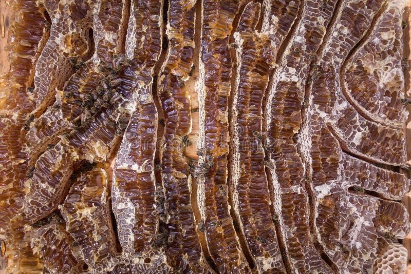 Stäng sig upp sikt av honung fyllda honeycells och funktionsdugliga bin royaltyfria bilder