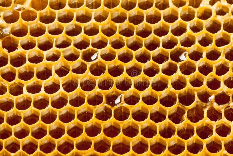 Stäng sig upp studion som skjutas av autentisk organisk honung i honungskakan - sunt matbegrepp arkivbilder