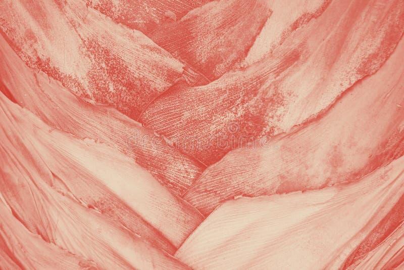 Stäng sig upp textur av den gråa pastellfärgade kulöra tropiska palmträdstammen korallduotone arkivbild