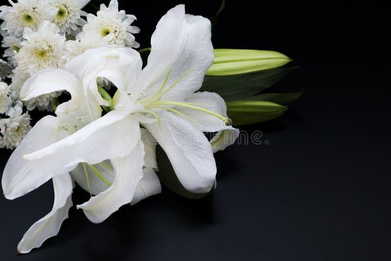 Stäng sig upp vit lilly på en mörk bakgrund arkivfoto
