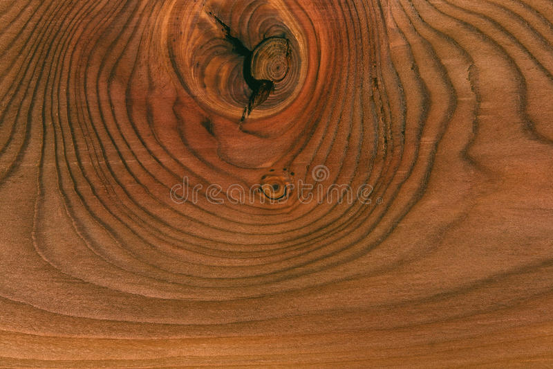 stäng textur upp trä fatta trädet cirklar på ett snittträd arkivbilder
