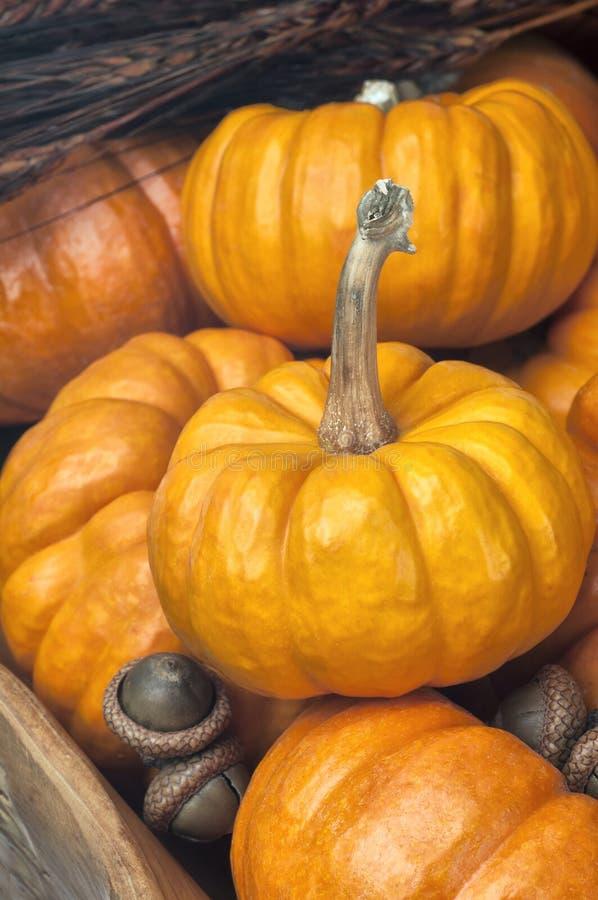 Stäng upp av många Mini Pumpkins i en träbunke med ekollonar arkivbild