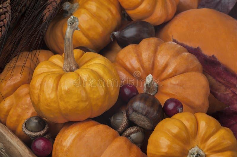 Stäng upp av många Mini Pumpkins i en träbunke med ekollonar arkivfoto
