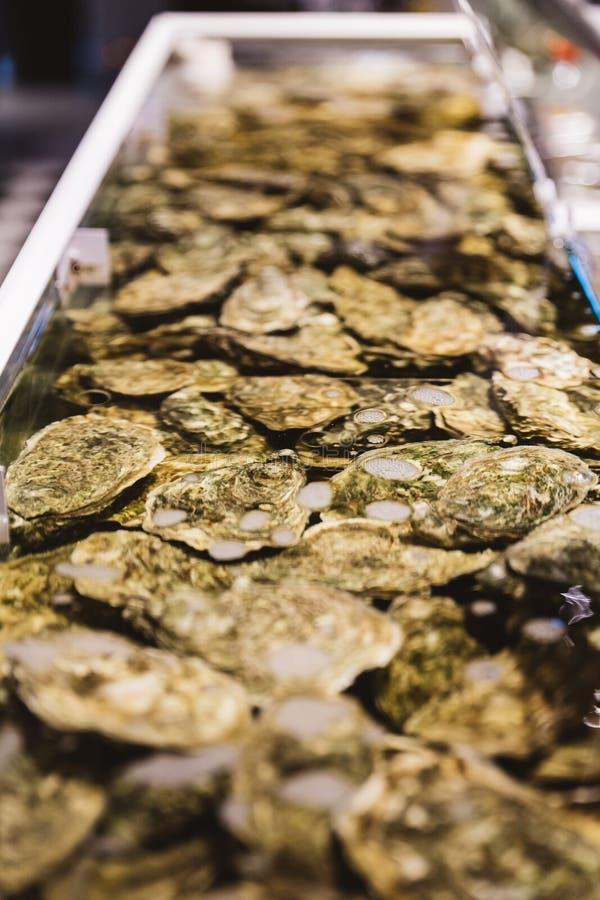 Stäng upp levande och nya ostron i skal under vattnet royaltyfri fotografi