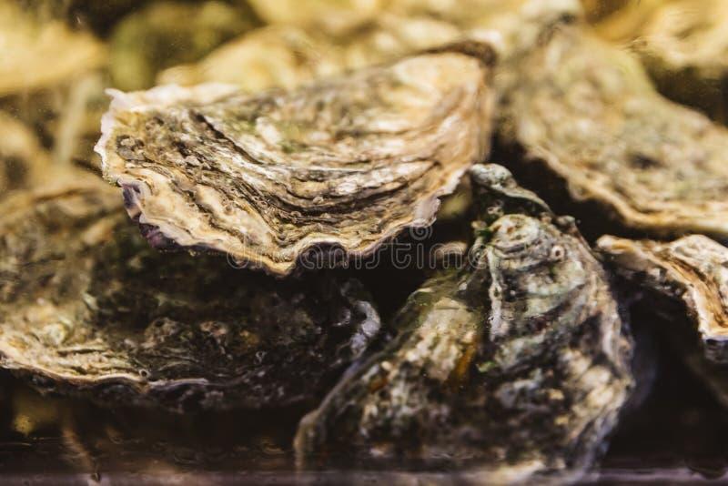 Stäng upp levande och nya ostron i skal under vattnet royaltyfria foton