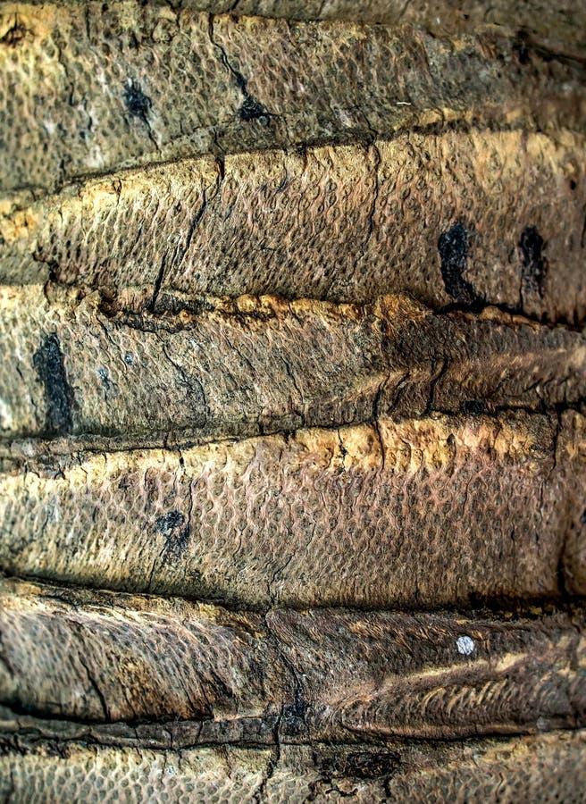 Stängd-upp kokospalmtextur royaltyfri foto