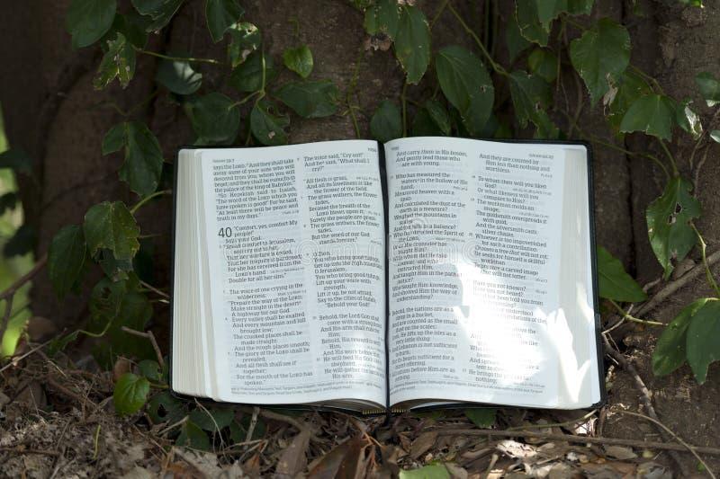 Stängning av öppna Bibeln i Isaiah-kapitel 40 utomhus. Bakgrund med blad och trädkoffert royaltyfria bilder