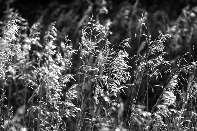 Download Stäpp i svartvitt fotografering för bildbyråer. Bild av vitt - 78731241