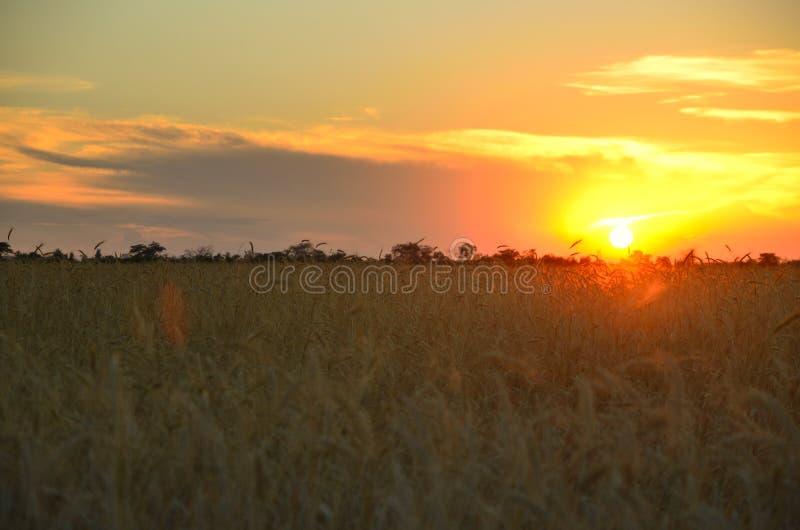Stäpp på solnedgången arkivfoto