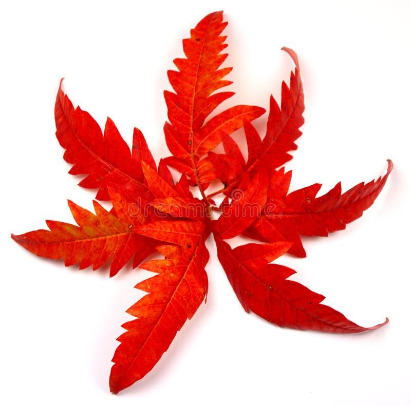 Stärke des Herbstes stockfotografie