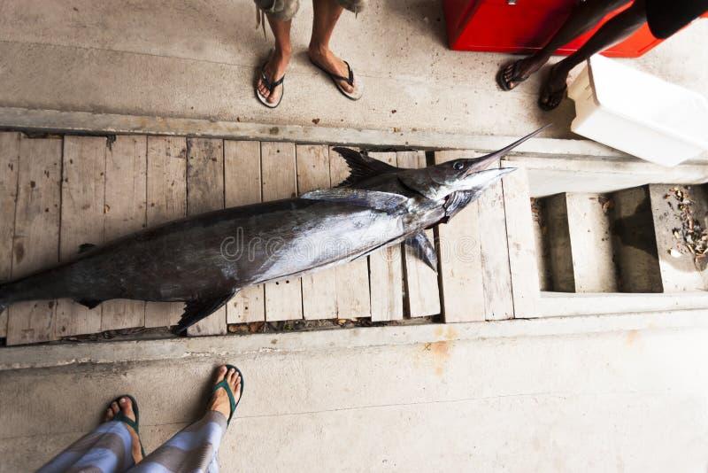 Stå runt om att se en död fisk fotografering för bildbyråer