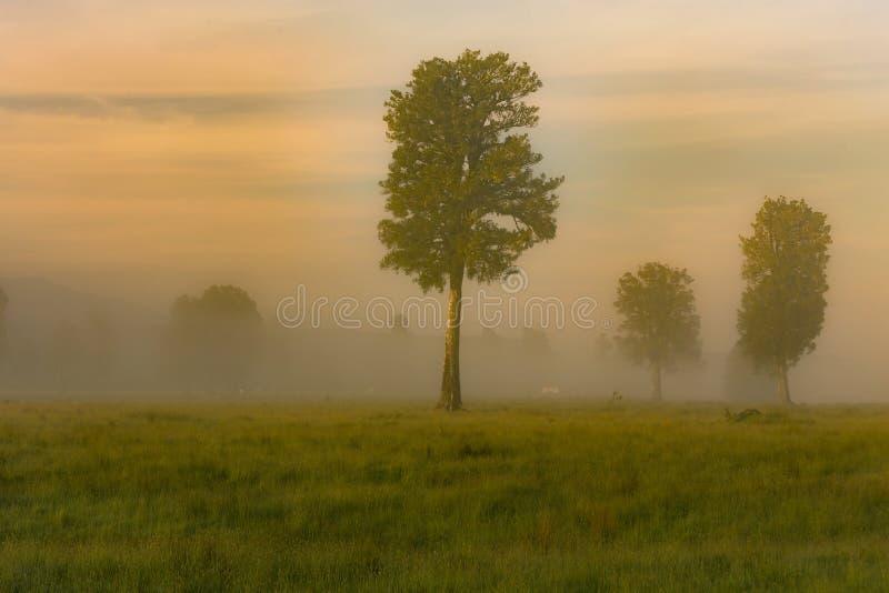 Stå trädet över grönt exponeringsglas i morgonen arkivfoto