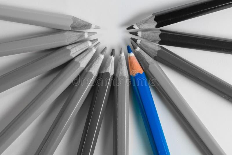 Stå ut den blåa blyertspennan ut ur gråa blyertspennor fotografering för bildbyråer
