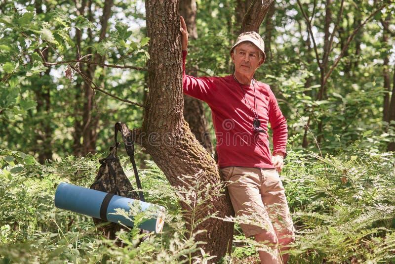 Stående av anseendet för hög man nära träd över skogbakgrund Mogen man med ryggsäck- och filtstopp som ska has att vila efter lån royaltyfri bild