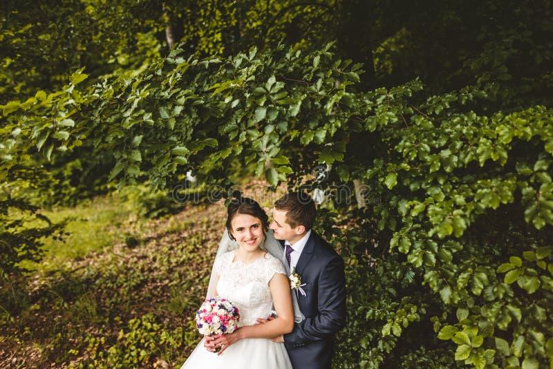 Stående av bruden och brudgummen på skogen arkivfoto