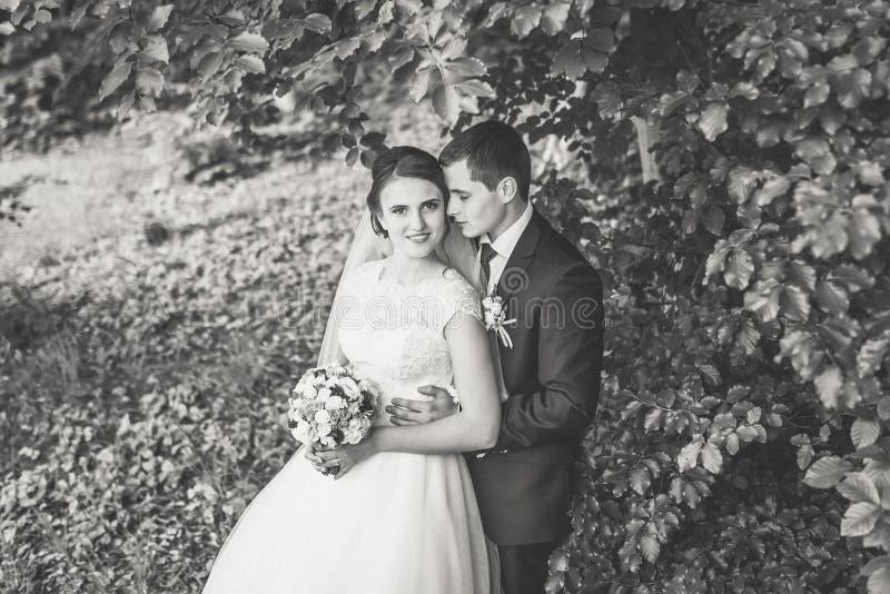 Stående av bruden och brudgummen på skogen royaltyfria foton