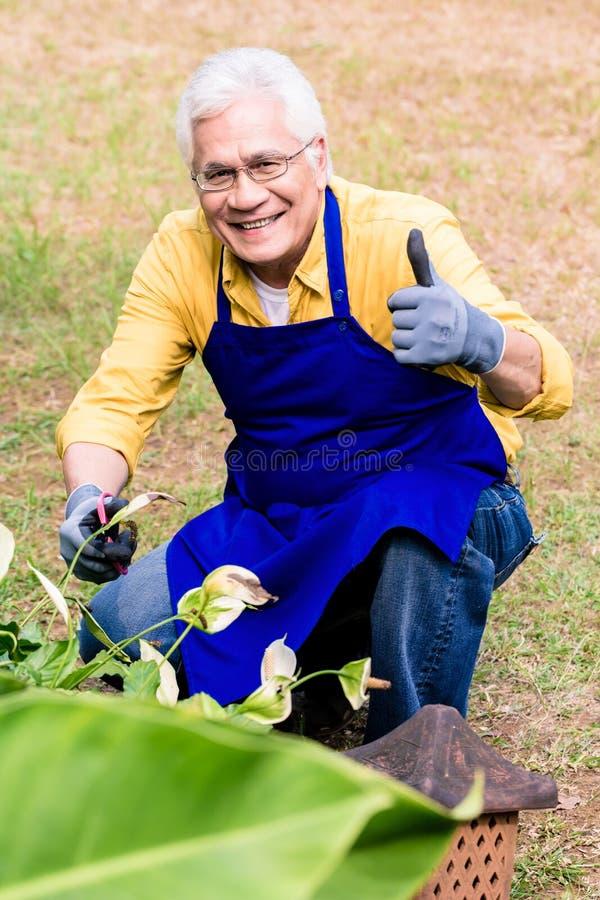 Stående av den aktiva asiatiska äldre mannen som ler, medan beskära i trädgård arkivbilder