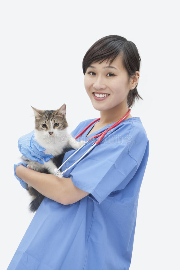Stående av den asiatiska kvinnliga veterinär- hållande katten över grå bakgrund fotografering för bildbyråer