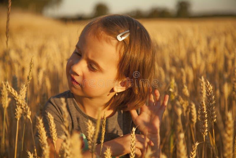 Stående av den gulliga barnflickan som går i det guld- fältet för vete arkivbild