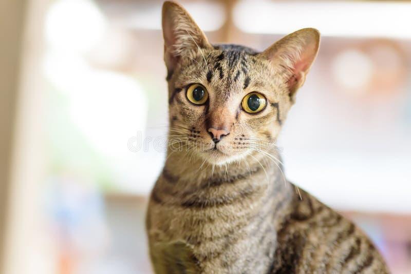Stående av den gulliga kattframsidan royaltyfria foton