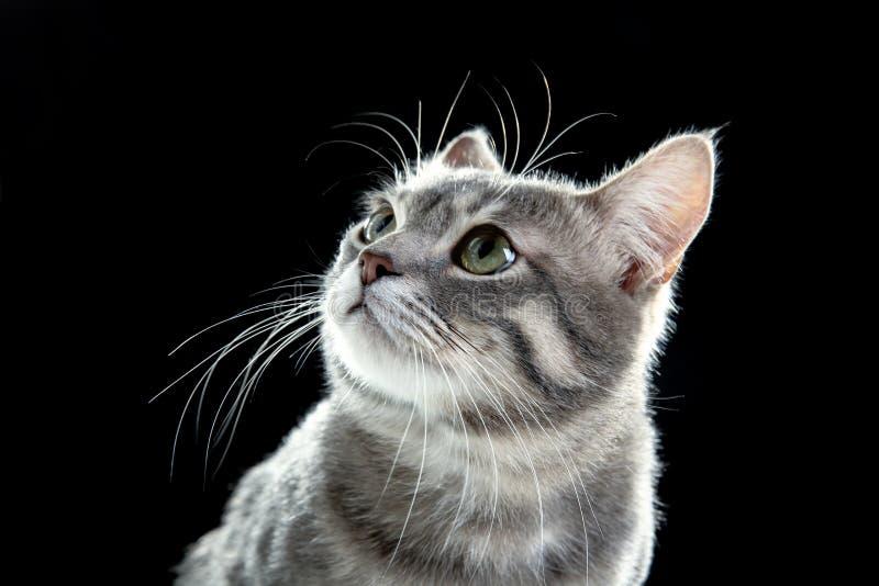 Stående av den gulliga roliga katten royaltyfria bilder