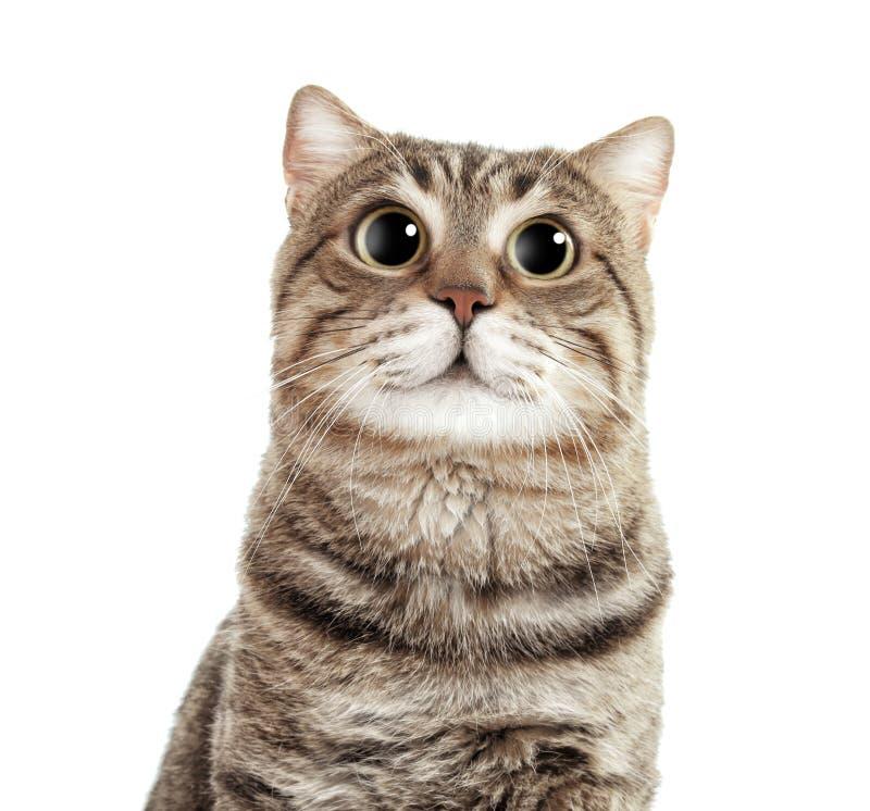 Stående av den gulliga roliga katten med stora ögon royaltyfri fotografi