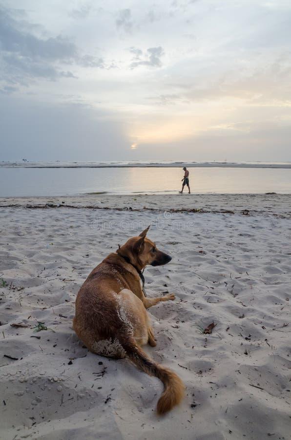 Stående av den härliga hunden för tysk herde med kragen och personen i bakgrund på den afrikanska stranden under eftermiddag royaltyfria bilder