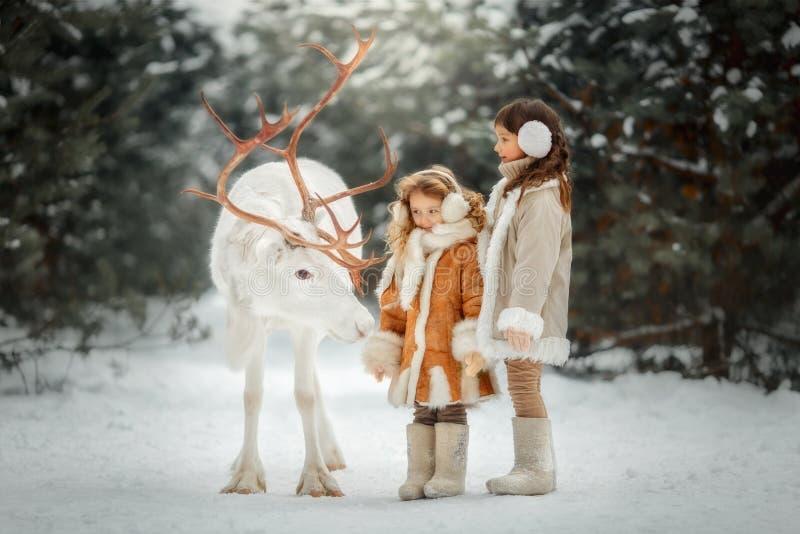 Stående av den härliga lilla flickan i pälslag på vinterskogen royaltyfria foton