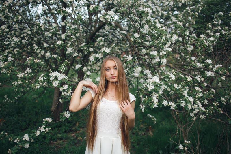 Stående av den härliga unga kvinnan, i att blomma för äppleträd Den stilfulla flickan i den vita klänningen med äppleträd blommar arkivfoton