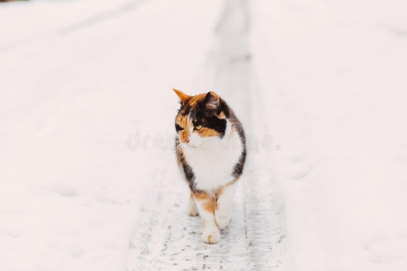 Stående av den hemlösa gå katten royaltyfri bild