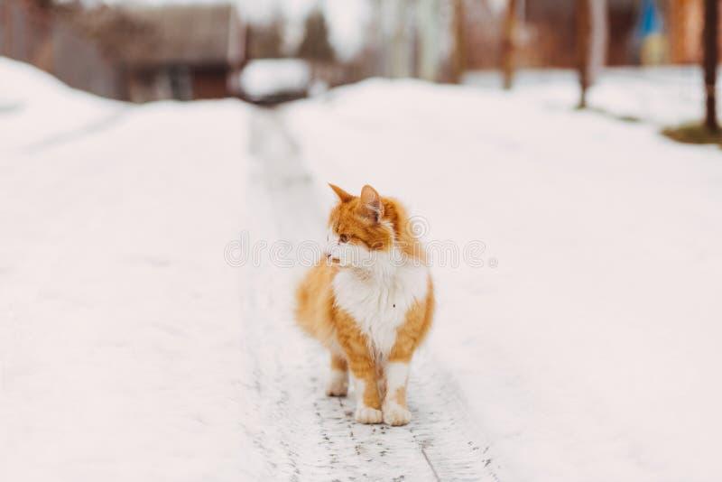 Stående av den hemlösa katten arkivbilder