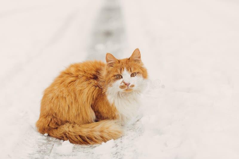 Stående av den hemlösa katten som ser kameran arkivfoto