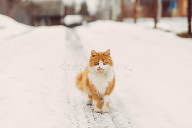 Stående av den hemlösa katten som ser kameran arkivfoton