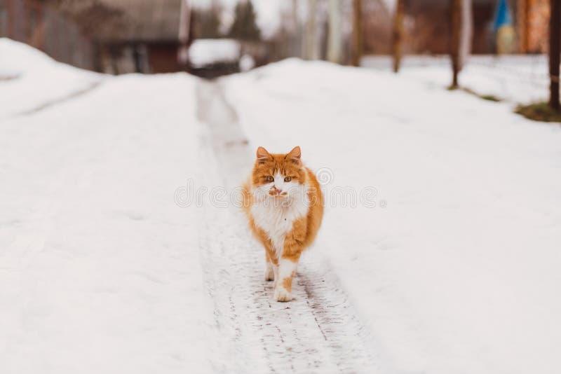 Stående av den hemlösa katten som ser kameran royaltyfri bild