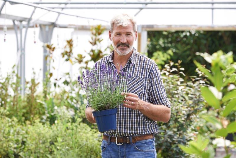 Stående av den mogna mannen som väljer växter på den trädgårds- mitten arkivfoto