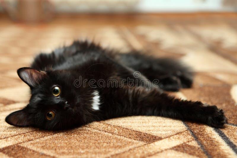 Stående av den svarta katten som kopplar av på matta arkivfoton