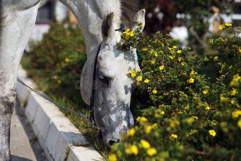Stående av den trevliga lopphästen runt om utomhus- solig dag för blomma arkivbild