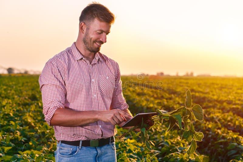 Stående av det unga bondeanseendet i sojabönafält arkivfoto