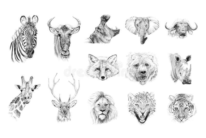 Stående av djur som med blyerts dras av handen stock illustrationer